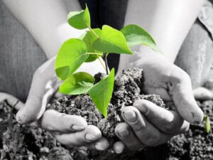 going green by planting a tree