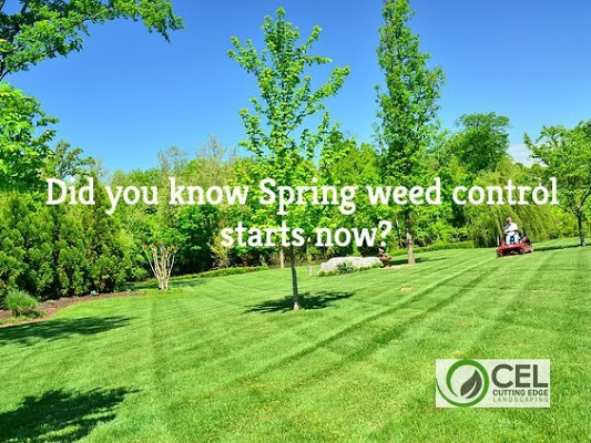 spring weed control